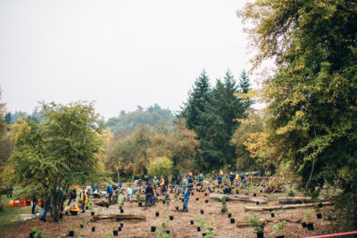 Volunteers Help Plant an Urban Forest