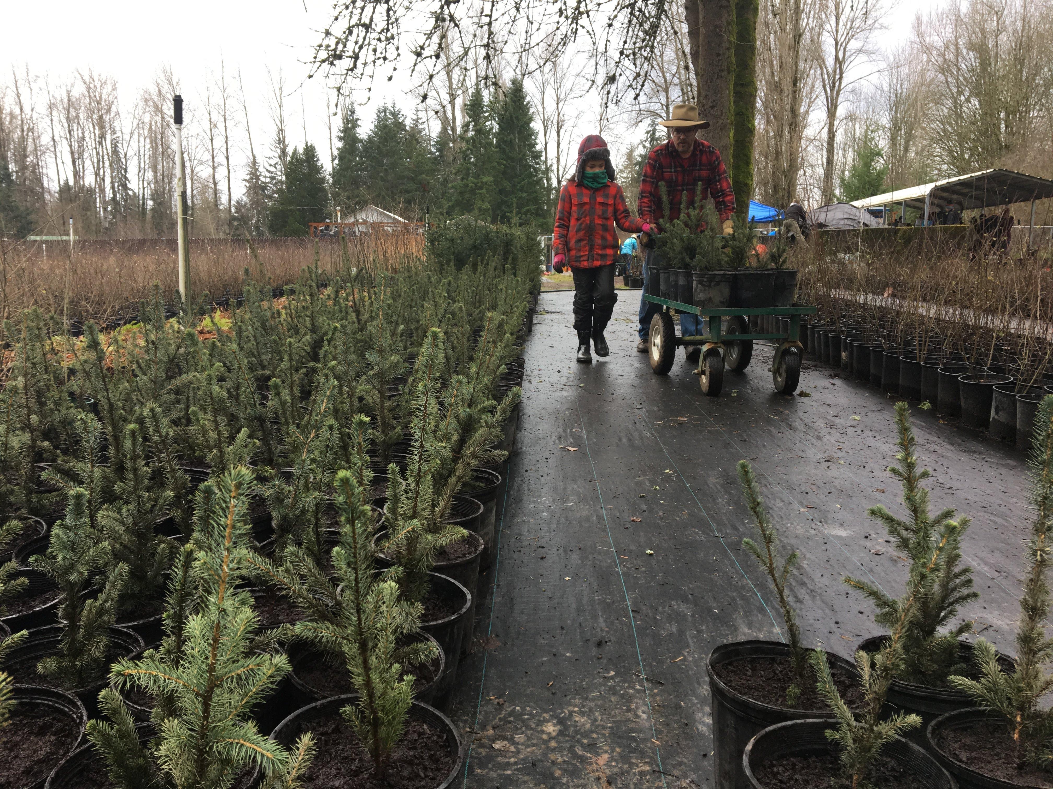 Winter Organizing Native Plant Nursery Edition