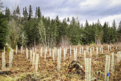 Stossel Creek: A Forest Planted for the Future